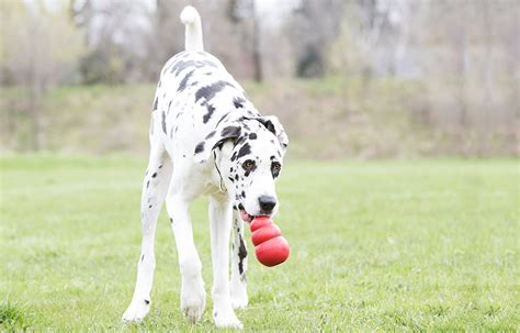 best big dogs 10 best big toys strong stimulating and affordable