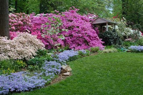 patio rhododendron lovely azalea garden plants wearefound home design