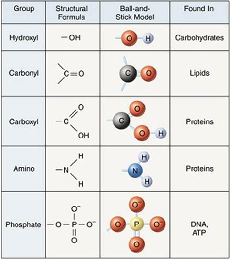 carbohydrates which one of the following characteristics 4 major types of biomolecules and their functional groups