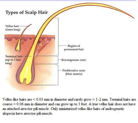 hair and head types hair dr rajiv desai