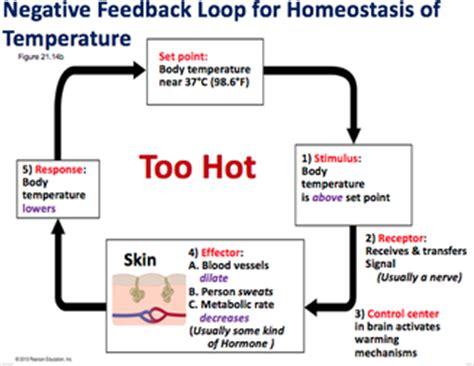bio11 lec25: homeostasis & digestive system professor