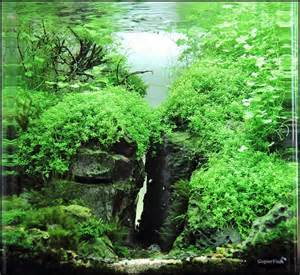 751 best images about aquascaping on tropical