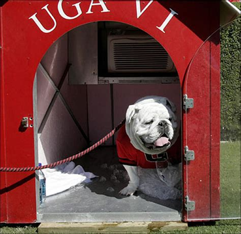 uga dog house uga vi r i p dawg sports