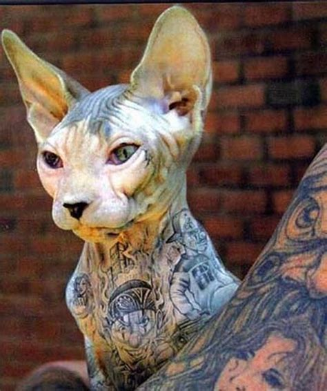tattoos and piercings on your pet islip animal shelter