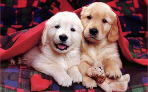 49 cute dog wallpapers top ranked cute dog wallpapers pc lkz484 dogs and puppies funny puppies puppies world puppy