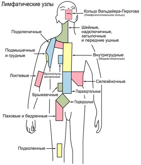 lymph node wikipedia file lymph node regions ru svg wikimedia commons