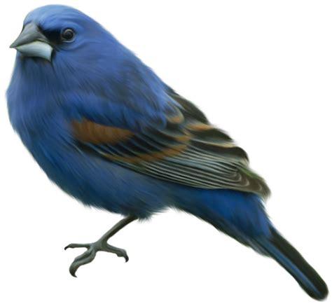 14 gambar lukisan burung seni rupa