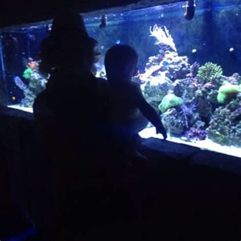 aquarium design austin tx aquarium yelp photos for manhattan aquariums yelp 2017