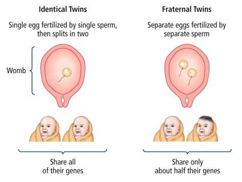 born form definition adoption twin studies ao1 ao2 ao3 psychology wizard