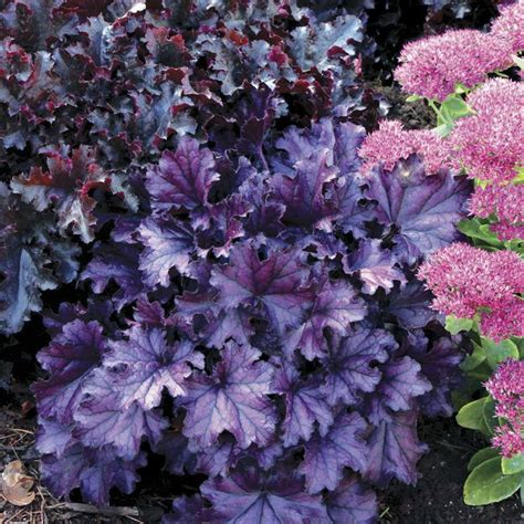 popular garden flowers top 10 flowers that bloom all year flower gardens and plants