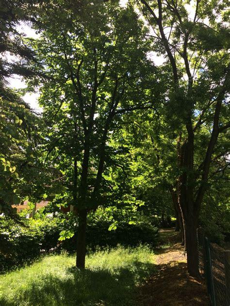 alberi illuminati pi 249 di 25 fantastiche idee su alberi illuminati su