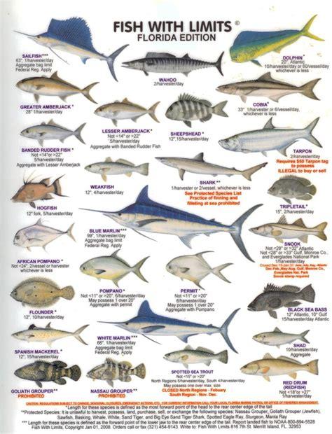 florida fish boat charters wildlife ocean