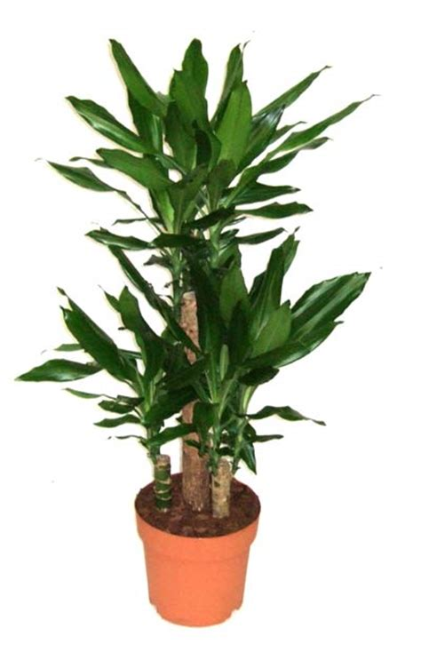 Indoor Plants To Clean Air by Go Green Clean Purify The Air In Your Studio Or Office