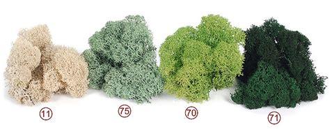 winterharte gräser für steingarten island moos im shop bestellen