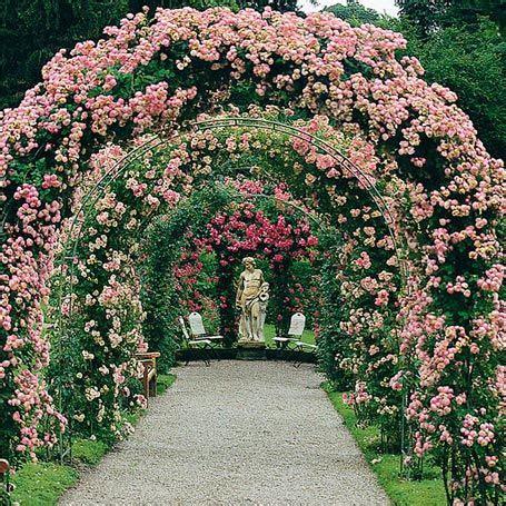 Garten Dicht Pflanzen by Kletterrose Ramblerrose Raubritter 220 Berreich