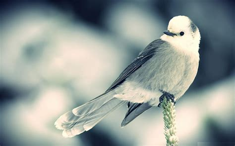 Beautiful Small Birds Wallpapers Entertainment Only | beautiful small birds wallpapers entertainment only