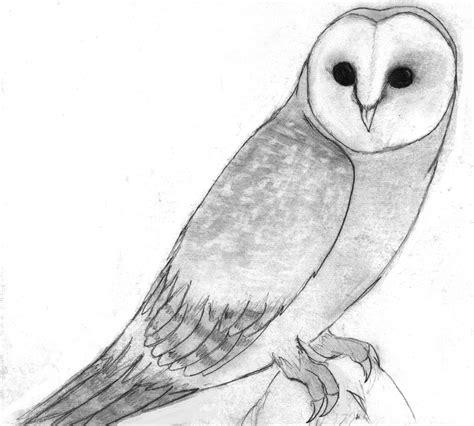 Barn Owl By Sapphireclaw On Deviantart Barn Owl Drawing