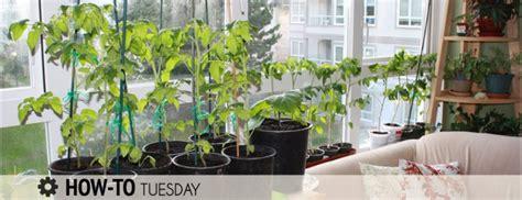 indoor vegetable garden how do i grow vegetables indoors winter farm and dairy