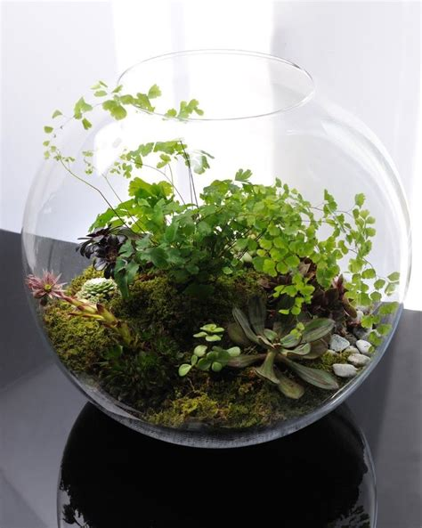 Make Plant - 17 best images about diy plant terrariums on