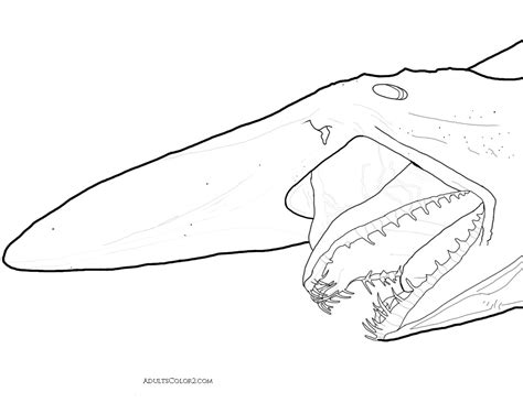 goblin shark coloring page 29 coloring pages killer whale orca whale coloring