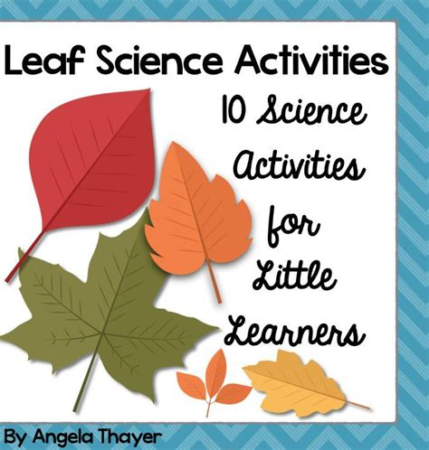 kindergarten activities with leaves 1000 images about learning themes nature study on