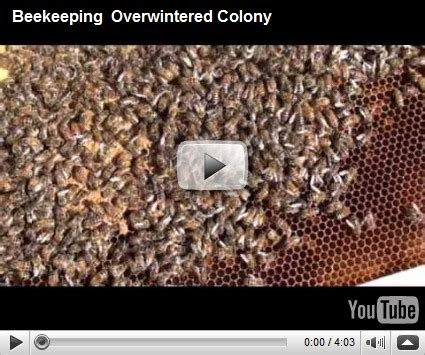 basic overwintering basic beekeeping lesson 72 the antenna of the bee