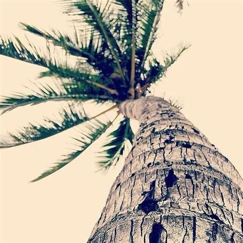 Palm Top Vv 3219 333 best palm trees images on palm trees nature and beautiful places