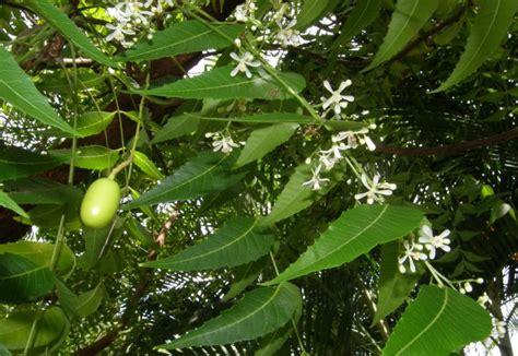 Insektisida Furadan 3g balai penyuluhan pertanian purwoasri hama penggerek