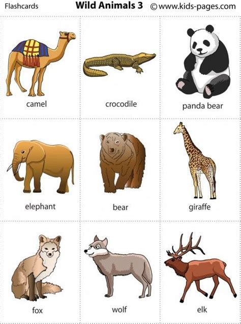 printable animal pictures of wild animals wild animals flashcard and animals on pinterest