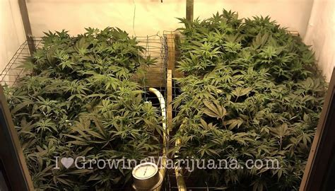 worldwide indoor marijuana grow guide the best and easy way denver ride worldwide indoor marijuana grow guide 28 images worldwide indoor marijuana grow guide the