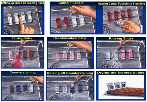 Alat Tes Darah Lengkap tata cara pewarnaan bta tes darah lengkap