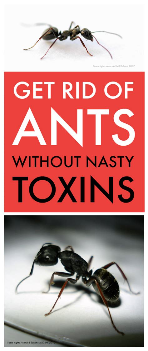 get rid of ants in bathroom get rid of ants in bathroom 28 images small drain flies in house what helps to get
