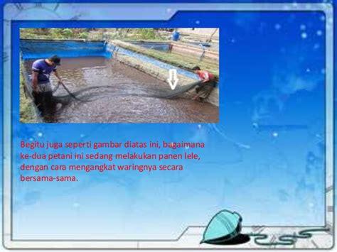 Jaring Ikan Waring Hitam Single 1 Roll Jaring Kebun Dan Keramba pemanfaatan waring dalam perternakan ikan lele