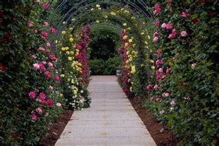 rose arbor and trellis my garden plans pinterest woodwork rose pergola plans pdf plans