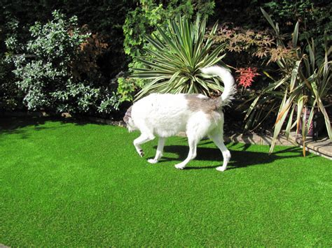 is grass for dogs blades artificial grass artificial grass for dogs