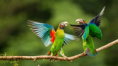 Pictures Of by Most Beautiful Parrots 1080p Wallpapers Birds Hd