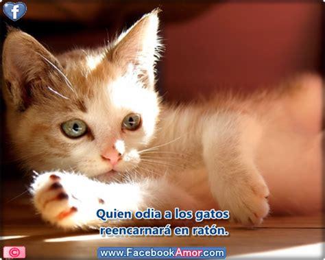 imagenes lindas de gatitos con frases imagenes para portada de facebook de gatitos tiernos con