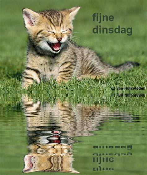 imagenes feliz domingo con gatos plaatje dinsdag 187 animaatjes nl