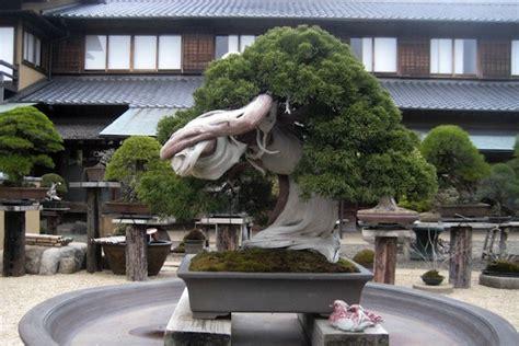 Bor Bonsai dizajn doma interijer doma namjestaj arhitektura