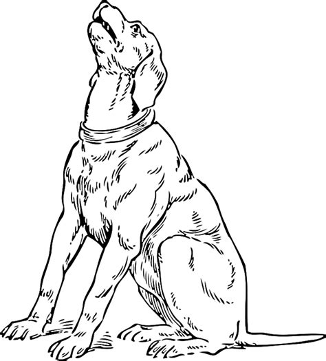 coloring pages of coon dogs coonhound coloring pages coloring pages