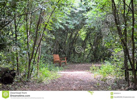 bench in nature wood bench in nature trail stock photo image 56325914