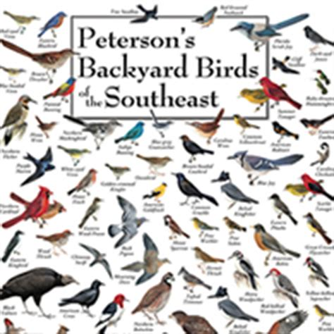 duncraft peterson bird notecard assortment 2