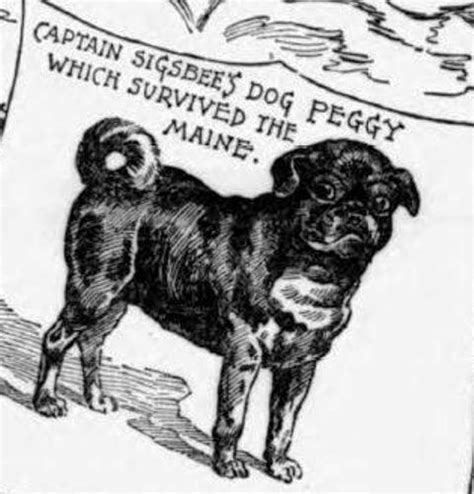 peggy the pug 1898 peggy the pug tom and the cat martyrs of the uss maine the hatching cat the