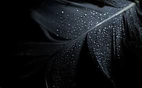 wallpaper dasar hitam black only black pinterest feathers wallpapers