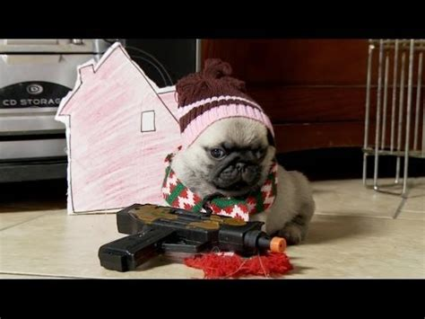 baby with pugs the home alone re enacted by baby pugs