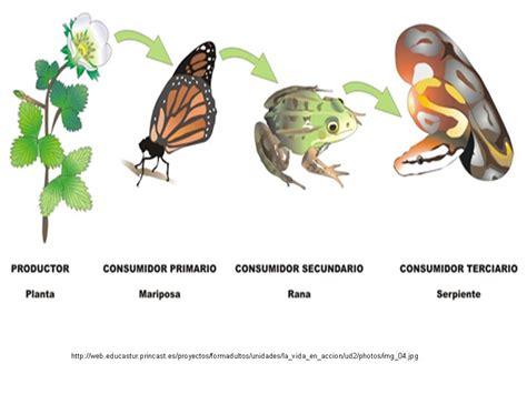 cadenas troficas en ecosistemas mi entorno un ecosistema viviente red trofica