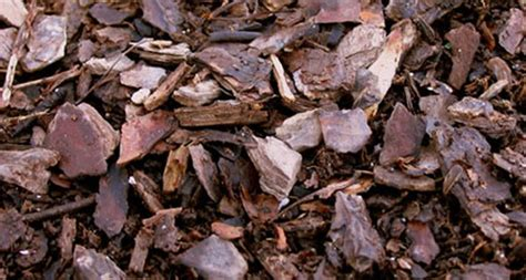 hardwood mulch home depot understanding mulch garden club