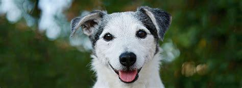 what should i feed my puppy senior food nutrition feeding guide petsmart