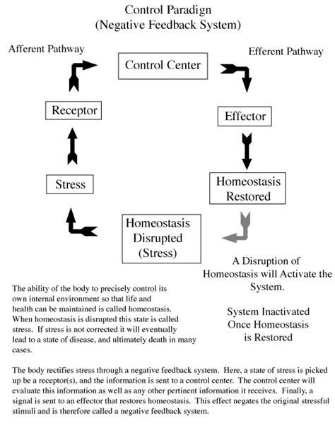 Feedback Mechanisms Worksheet Answers by 6 5 Nerves Hormones And Homeostasis Sl Hl2 Biology Ferguson