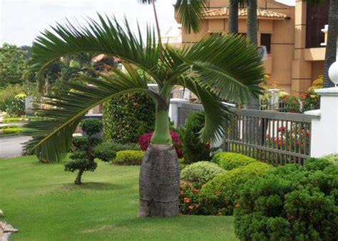 Landscape Supply Fort Myers Palm Tree Nursery Fort Myers